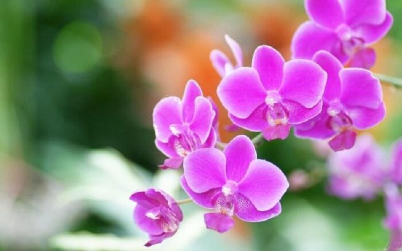 giải mã giấc mơ thấy hoa lan - lô để online go88